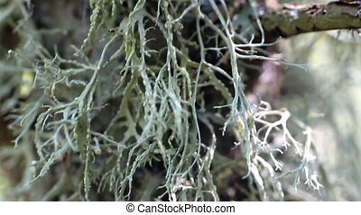 Graceful lichens on tree trunk Wiring camera from top down