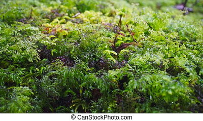 Alpine vegetation plants close up - Alpine vegetation with...