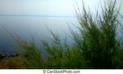 Green tamarisk from desert on the shore of blue lake