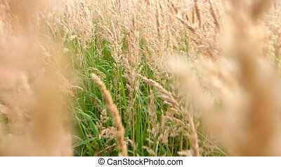 Walk through lush meadow. Summer memory - Camera moves...