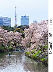 parque, primavera,  chidorigafuchi, estación, Durante