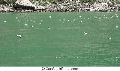 Wild Birds and Water Fowl