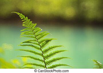View of fern leaf - Close up of a fern leaf