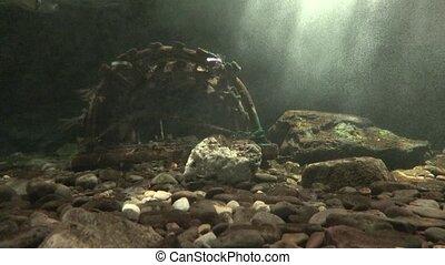 Ocean Floor or Seabed