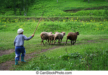 Young shepherd - Shepherd with his sheep herd