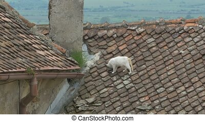 Cat on the Roof - A cat on the roof of an old house with...