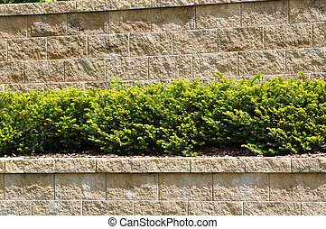 Tiered Retaining Wall with Evergreen Shrubs