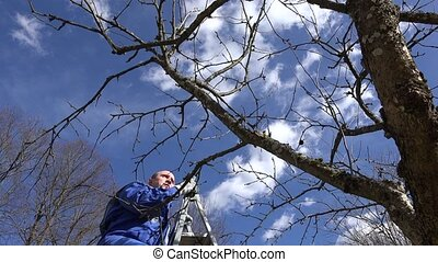 Professional gardener man climb on ladder and prune fruit...