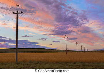 power line in a field at sunset - power line in a wheat...