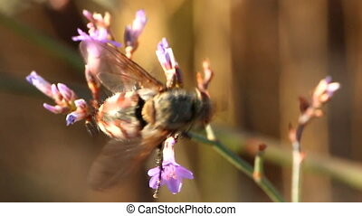 Vertical takeoff Fly feeds on flowers and then flying away...