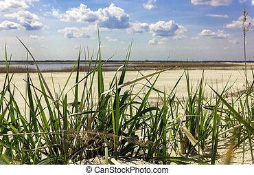 Green grass closeup on a sandy beach