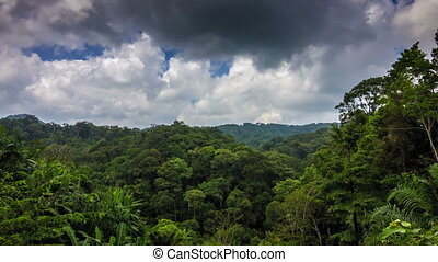 Tropical forest with clouds time lapse