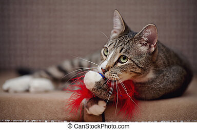 Striped cat on a sofa plays with a toy. - Striped domestic...