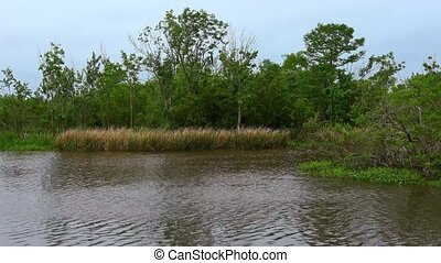 The Swamps of Louisiana - great nature