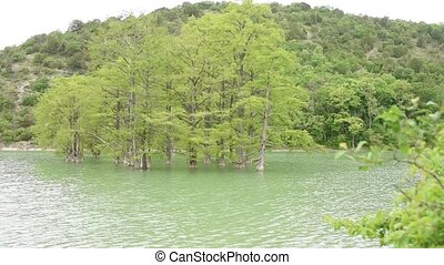 Cypress swamp growing out of the water on the background of...