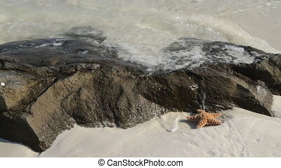 Starfish In Surf By Rock