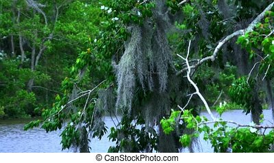 Amazing wild vegetation in Louisiana swamps - Wild...