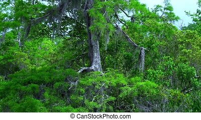Wild vegetation in Louisiana swamps