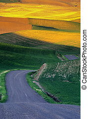 Palouse wheat fields and road - Palouse wheat fields, road,...