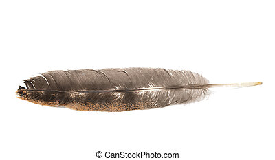 bird feather isolated on white background