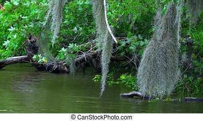 Boat tour through the swamp - amazing nature