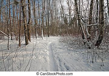 caminho, floresta, Inverno