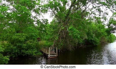 Boat tour through the swamp