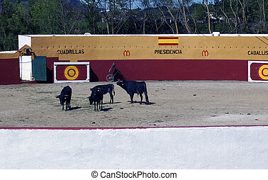 Small bullring in a village in Andalusia, Spain