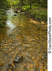 Stream, Pink Beds Area, Pisgah NF, NC