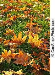 Autumn leaf on grass ground. Nature composition.