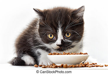 kitten and cat food - kitten and bowl of cat food