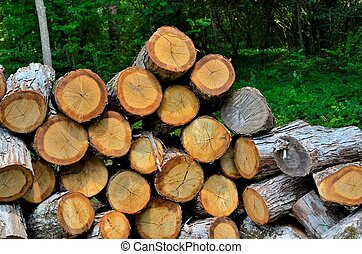 Stack of cut wood ready to be split