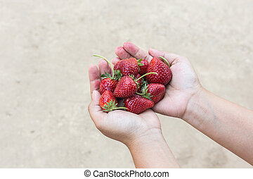 Hand holding strawberry on ground background - Close up hand...