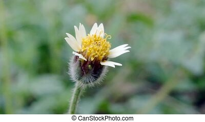 flower moving in the wind w - A small flower moving in the...