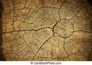 Wood texture of cut tree trunk, Tree-rings