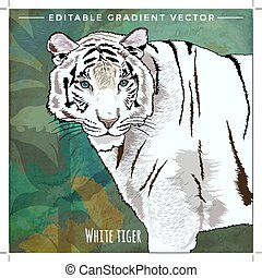 Wild Cats. White Tiger - Wild cats in the habitat. White...