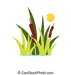 Vector Reed and Sedge Cartoon Illustration. - Aquatic...