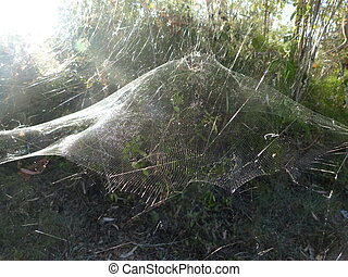 Spiderweb Shining in Sunlight - Huge and beautiful spider...