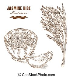 Thai jasmine rice in a bowl Rice plant hand drawn Vector...