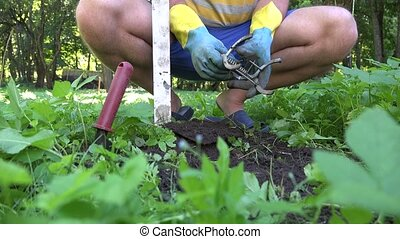 Gardener man hands setting special metal traps for mole...