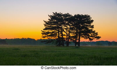 Sunrise in Green Meadow with Pines - Sunrise in Green Meadow...