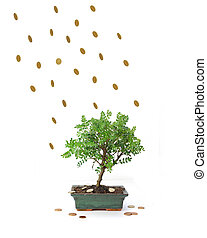 Financial windfall - Money raining down on a small tree