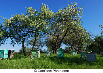 Honey bee hives in spring apple gar