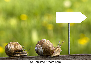 snails on the road - hurrying snail along old log on...