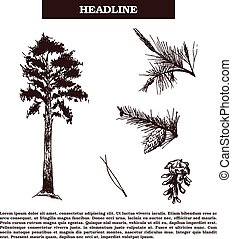 Vector vintage engraving illustration of pine-tree and pine cones isolated on white background
