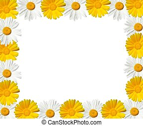 daisy frame - high resolution - white and yellow daisy frame...