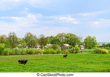 May rural landscape with grazing cow and horse on field