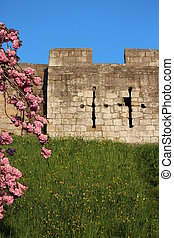 Medieval City Walls With Blossom.