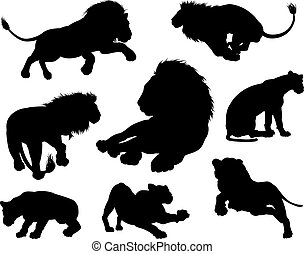 Lions Silhouettes - Lion silhouettes. Male and female lions...