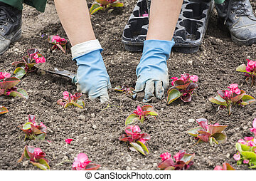Planting flowers - Gardeners hands planting flowers at city...